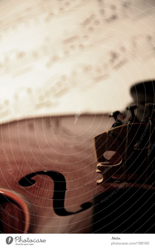 geige. ruhig Gefühle Musik Holz Musikinstrument Musiknoten Geige Streichinstrumente Notenblatt