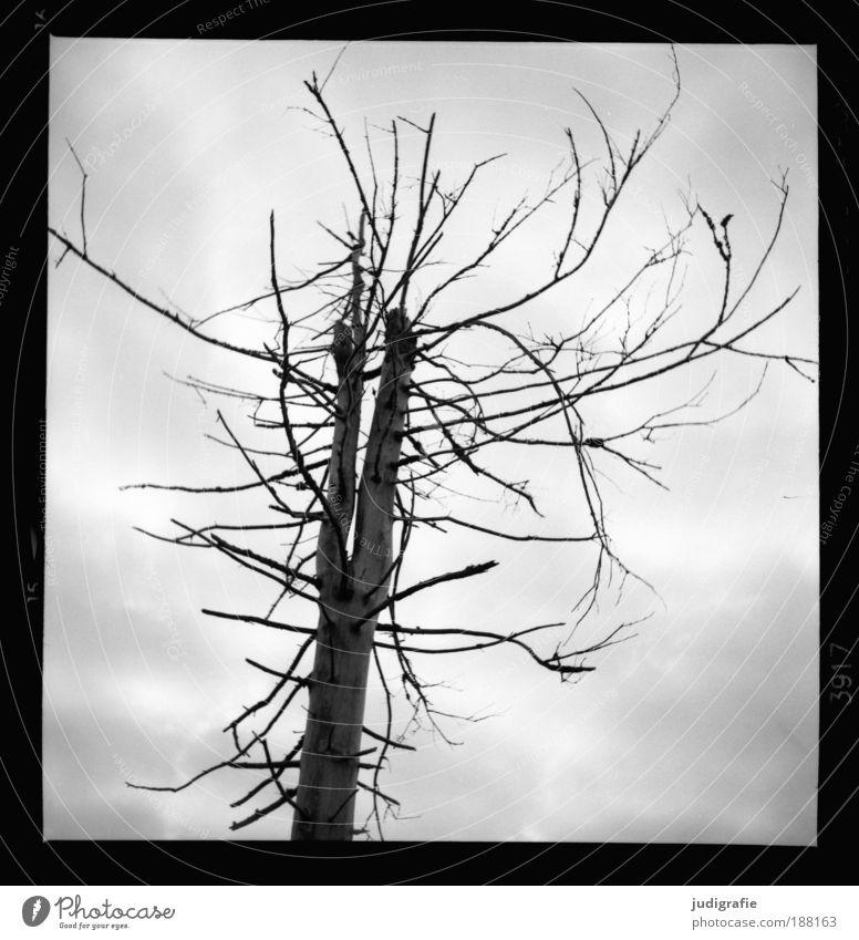 Brocken Himmel Natur Baum Pflanze Wolken Umwelt dunkel Tod Berge u. Gebirge Stimmung Klima wild Wachstum Wandel & Veränderung bedrohlich Trauer