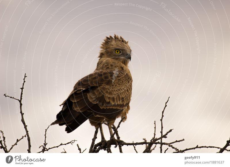 Ganz oben!!! Himmel Natur Ferien & Urlaub & Reisen Sommer schön Landschaft Wolken Tier Umwelt Frühling natürlich braun Vogel wild Wetter Wildtier