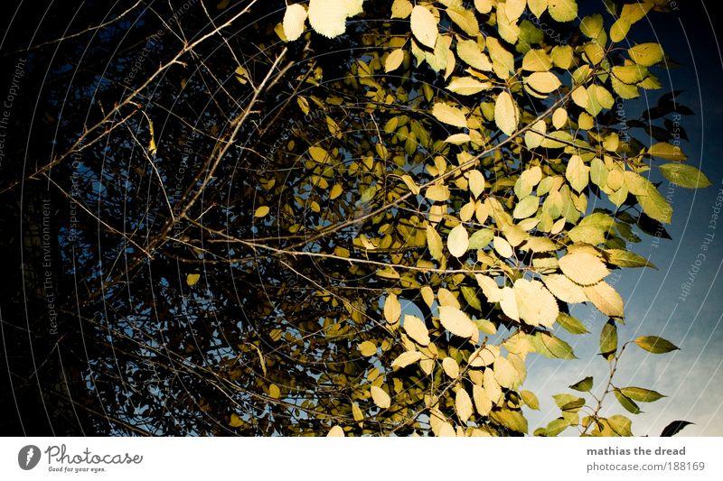 BLÄTTERDACH Natur schön Himmel Baum Sonne grün Pflanze Blatt Wolken Herbst Landschaft Umwelt Schönes Wetter Baumkrone Laubbaum Blätterdach
