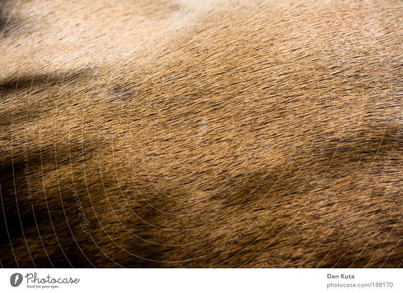 I Fell for you. Tier braun Behaarung liegen Zoo Wildtier Mensch beige Tierjunges Antilopen Sommerfell