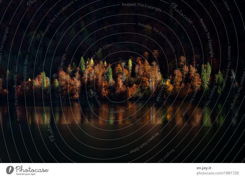 Lichtung Ferien & Urlaub & Reisen Natur Landschaft Pflanze Herbst Wald Seeufer leuchten orange ruhig Hoffnung Trauer Sehnsucht Glaube Religion & Glaube Idylle