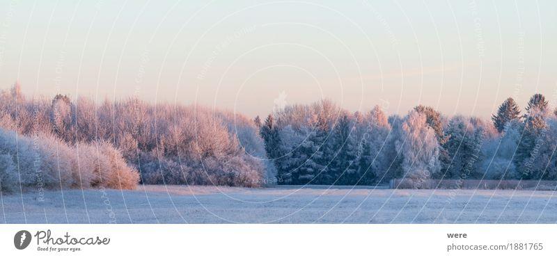 Wintermorgen ruhig Natur Landschaft Pflanze Eis Frost Baum kalt friedlich Umweltschutz Biotop Flora und Fauna Jahreskreislauf Morgennebel Erholungsgebiet Schnee