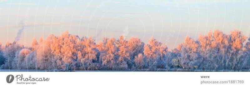 Baumglühen Natur Pflanze Baum Landschaft ruhig Winter kalt Eis Frost Umweltschutz friedlich Biotop Erholungsgebiet Morgennebel