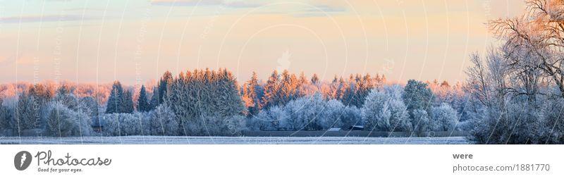 Winterlandschaft ruhig Natur Landschaft Pflanze Eis Frost Baum kalt friedlich Umweltschutz Biotop Flora und Fauna Jahreskreislauf Morgennebel Erholungsgebiet