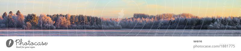 Frostig ruhig Winter Natur Landschaft Pflanze Eis Baum kalt friedlich Umweltschutz Biotop Flora und Fauna Jahreskreislauf Morgennebel Erholungsgebiet Schnee