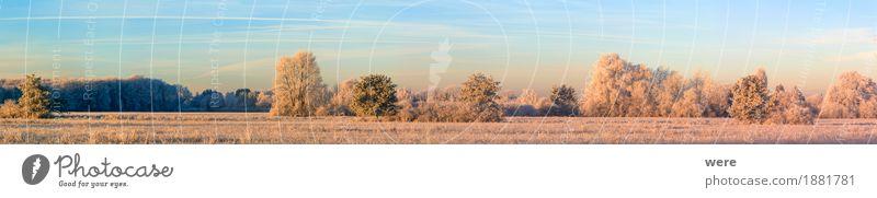 Eiszeit Natur Pflanze Baum Landschaft ruhig Winter kalt Eis Frost Umweltschutz friedlich Biotop Erholungsgebiet Morgennebel