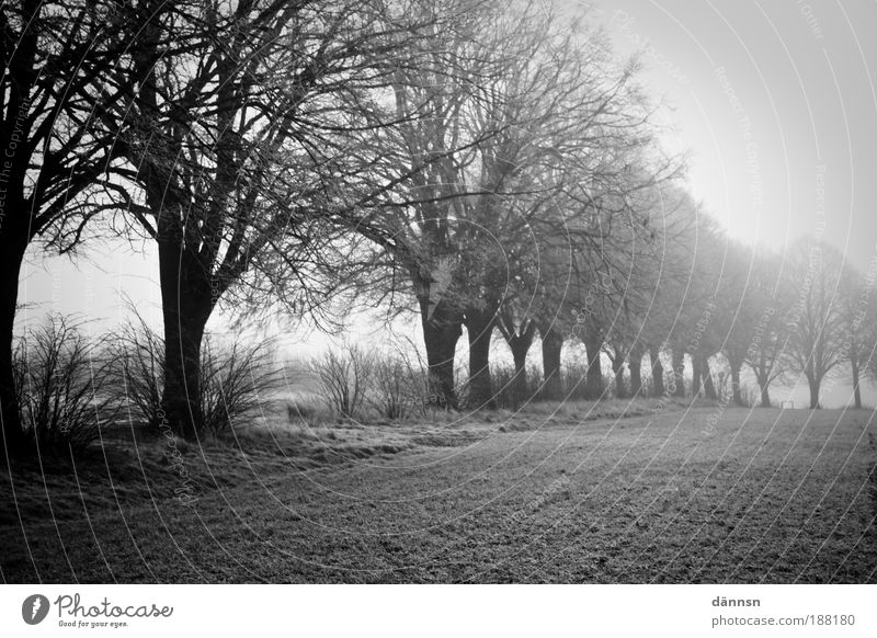 Nebel am Morgen Natur Landschaft Erde Winter Eis Frost Baum Gras Feld Wald Wege & Pfade Denken frieren Traurigkeit dunkel kalt grau schwarz weiß Trauer Tod