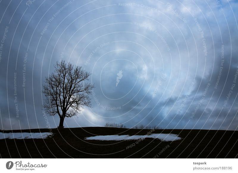Winterbaum Ferne Schnee Umwelt Natur Landschaft Urelemente Luft Himmel Wolken Gewitterwolken Horizont Sonnenaufgang Sonnenuntergang Sonnenlicht Baum Wiese Hügel