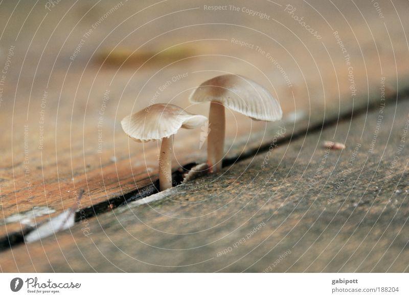 wir kommen da durch Natur rot Herbst Holz Wege & Pfade braun Bank Häusliches Leben Stengel Pilz Furche Spalte Fuge Ausdauer standhaft Lamelle