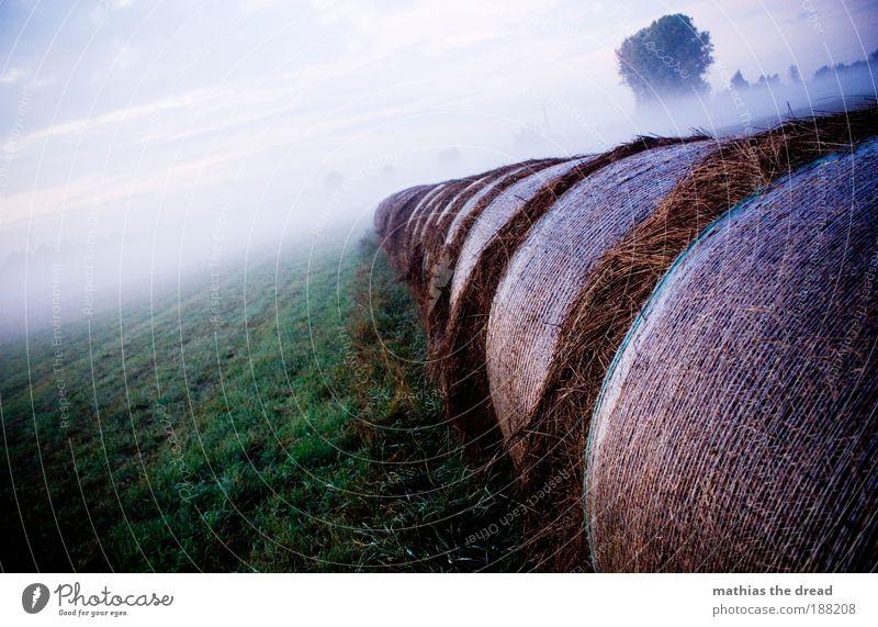NEBELSCHWADENBILDER Umwelt Natur Landschaft Pflanze Himmel Wolken Horizont Sonnenaufgang Sonnenuntergang Sommer Klima Wetter Schönes Wetter Nebel Baum Gras