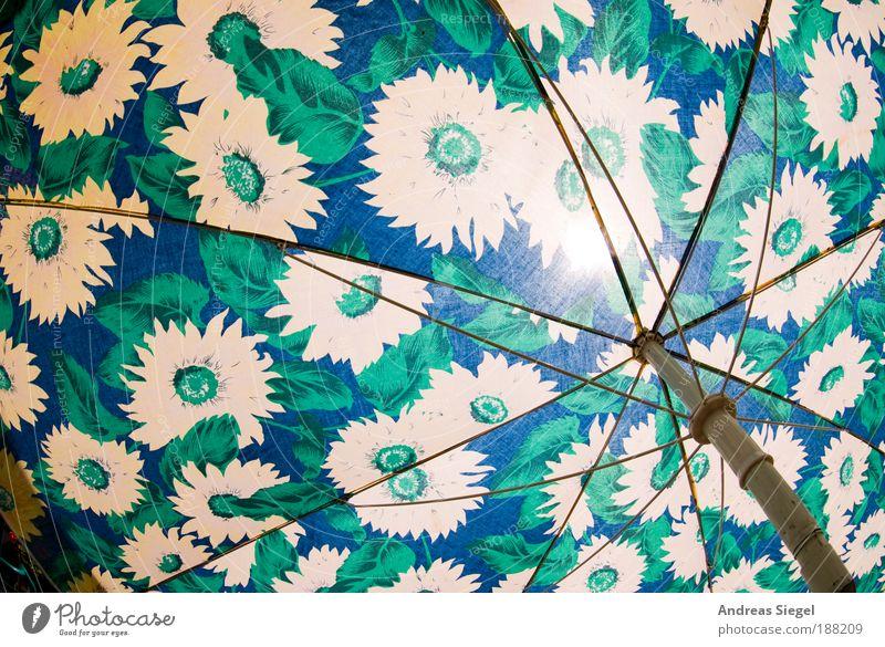 Lichtblick blau grün Ferien & Urlaub & Reisen Sommer Blume gelb Erholung Stil Wärme Zufriedenheit Freizeit & Hobby Wohnung Design Tourismus authentisch Lifestyle