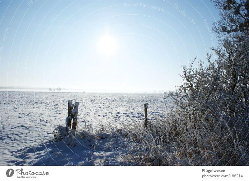 Ein Traum in weiß Ferien & Urlaub & Reisen Winter Ferne kalt Schnee Freiheit Horizont Zufriedenheit Freizeit & Hobby Ausflug Coolness Russland fantastisch