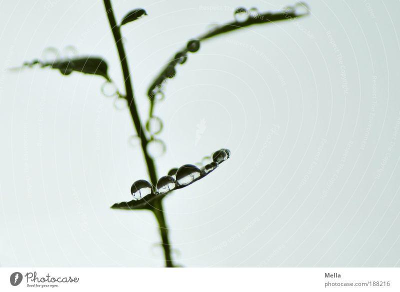 Universen Natur Pflanze ruhig Blatt grau glänzend klein Umwelt Wassertropfen nass frisch Wachstum Pause Tropfen rein natürlich