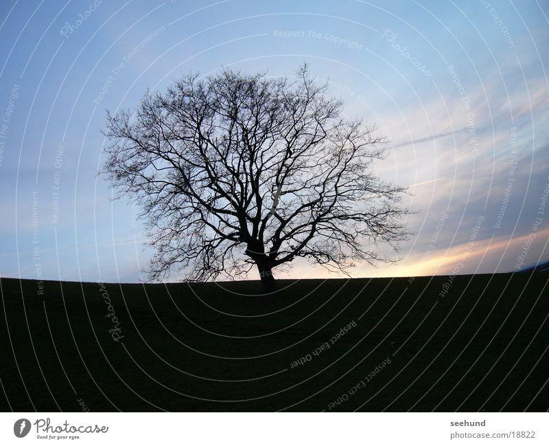 Baum um 16:30 Olympiapark München Winter Dämmerung Natur Abend Morgen Himmel Baum ohne Blätter Berge u. Gebirge