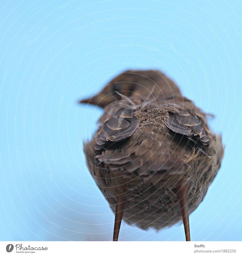 Ich hab den Rücken schön Natur Vogel Feder Hinterteil Tierjunges stehen Coolness frech lustig blau braun Hochmut trotzig Verachtung abfällig Desinteresse