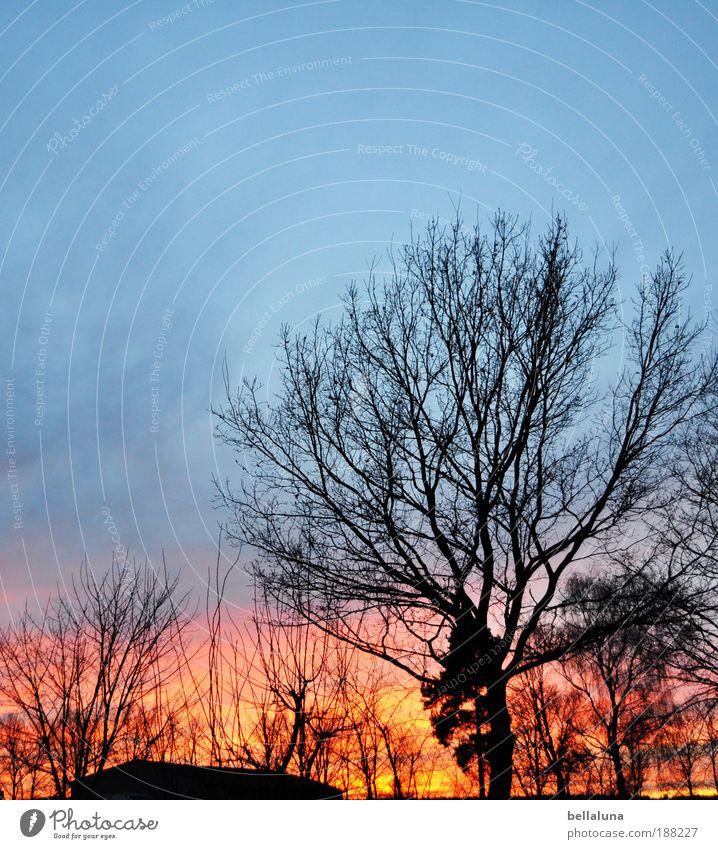 Schwerzkos Himmel brennt Natur Baum Pflanze Winter Wolken kalt Wärme Landschaft Umwelt Sträucher natürlich Dämmerung