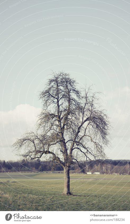 In der Ruhe liegt die Kraft harmonisch ruhig Garten Gemälde Natur Landschaft Winter Dürre Baum Park Wiese Feld Menschenleer dehydrieren authentisch einfach kalt