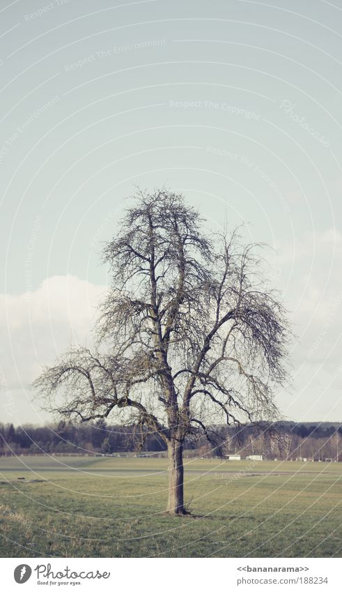 In der Ruhe liegt die Kraft Natur Baum Einsamkeit Winter ruhig Landschaft Wiese kalt Garten Park Feld elegant Ordnung authentisch Sauberkeit