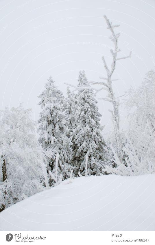 Meine Heimat ! Umwelt Natur Winter Klima Wetter Eis Frost Schnee Wald Felsen Berge u. Gebirge kalt weiß Einsamkeit Tanne Weihnachtsbaum Ast Waldsterben