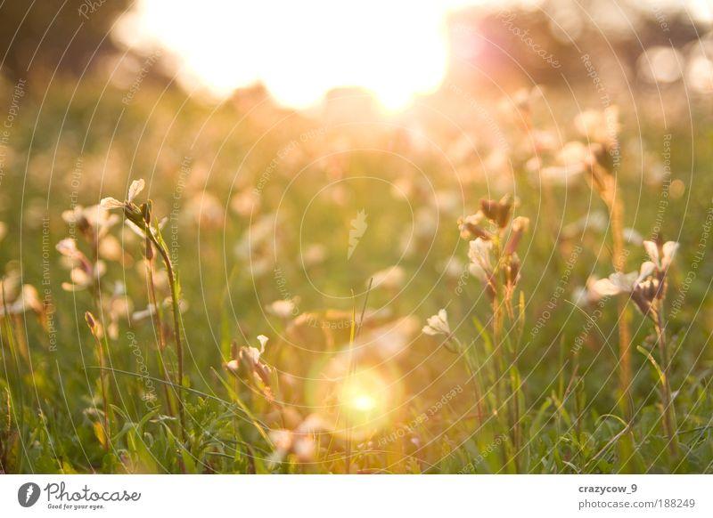 Natur Pflanze Gras Frühling träumen Park Umwelt Jahreszeiten