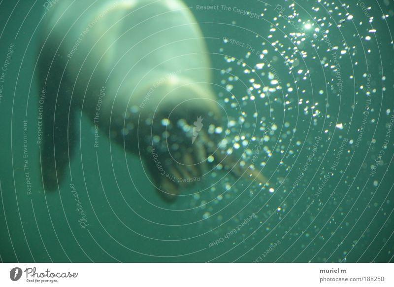 Den Kopf über Wasser halten. Natur grün blau Einsamkeit Tier Bewegung See Wellen Küste Wassertropfen tauchen dick atmen Aquarium