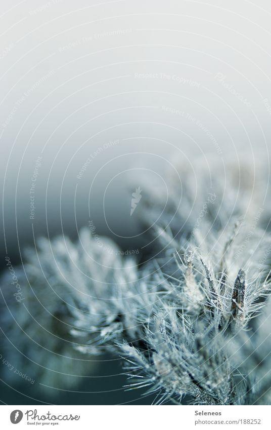 freezestyle Himmel Natur Wasser Pflanze Winter Wiese kalt Umwelt Landschaft Gras Wetter Eis ästhetisch Wachstum Klima Sträucher