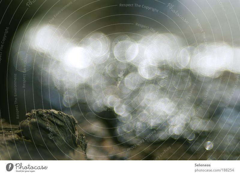 Im Auge des Betrachters Umwelt Natur Landschaft Erde Wasser Wassertropfen Sonne Sonnenlicht Sommer Herbst Winter Klima Wetter Schönes Wetter Regen Eis Frost