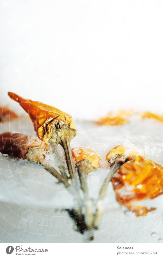 Trockenobsteis Natur Wasser Pflanze Winter kalt Ernährung Schnee Umwelt Lebensmittel Wetter Eis Frucht Energie Klima Sträucher Frost