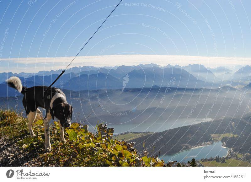 Pinkelpause Ausflug Berge u. Gebirge wandern Herbst Umwelt Natur Landschaft Wasser Himmel Wolken Horizont Sonnenlicht Schönes Wetter Pflanze Blatt Grünpflanze