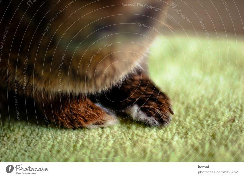 Hasenpfoten Tier Haustier Fell Krallen Pfote Hase & Kaninchen Zwerghase 1 sitzen braun grün Tierliebe Teppich Bodenbelag Farbfoto Innenaufnahme Nahaufnahme Tag