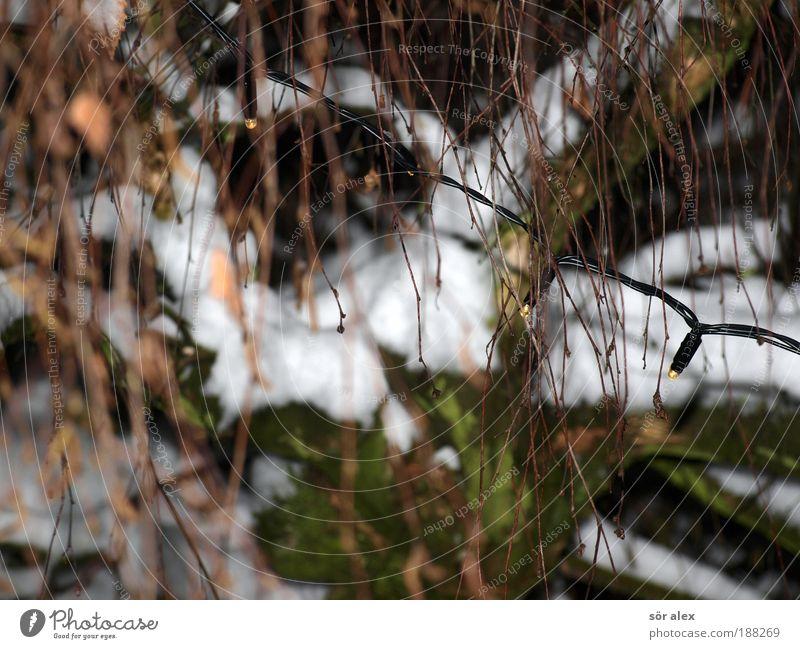 kein Tanne-Schmuck Baum kalt Gefühle Schnee Stimmung Kitsch Tradition Stress frieren Erwartung Weihnachtsdekoration Leuchtdiode Lichterkette Feste & Feiern