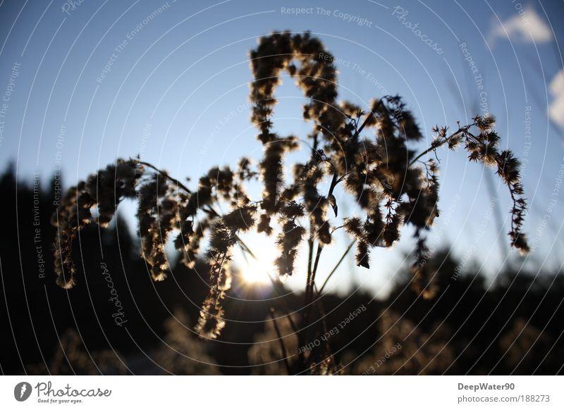 Cloud Umwelt Natur Sonnenaufgang Sonnenuntergang Schönes Wetter Pflanze Sträucher Wildpflanze Gefühle Tag Farbfoto Außenaufnahme Nahaufnahme Detailaufnahme