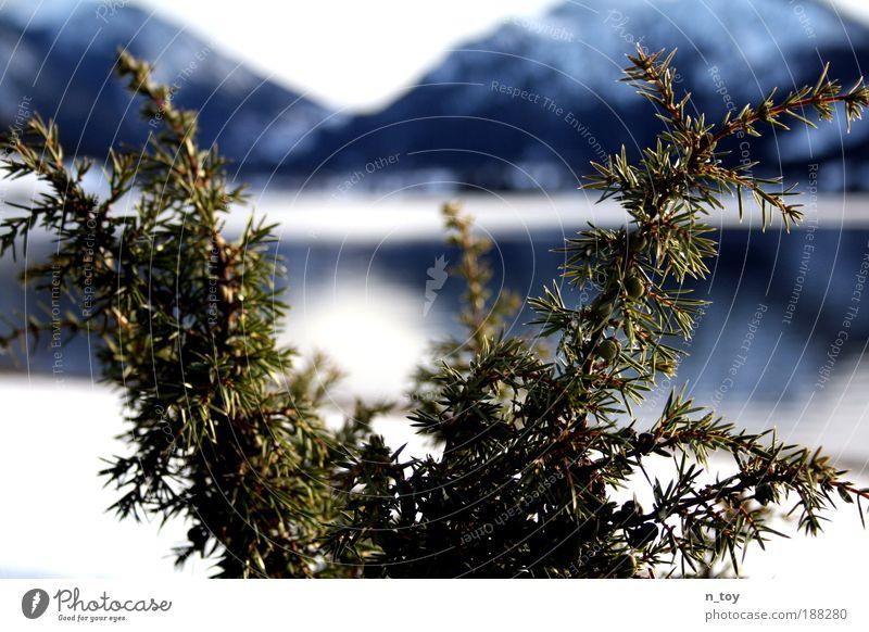 winterschlaf Natur Wasser grün blau Winter Schnee Berge u. Gebirge träumen Traurigkeit Landschaft Eis Stimmung Wetter Frost Sträucher Alpen