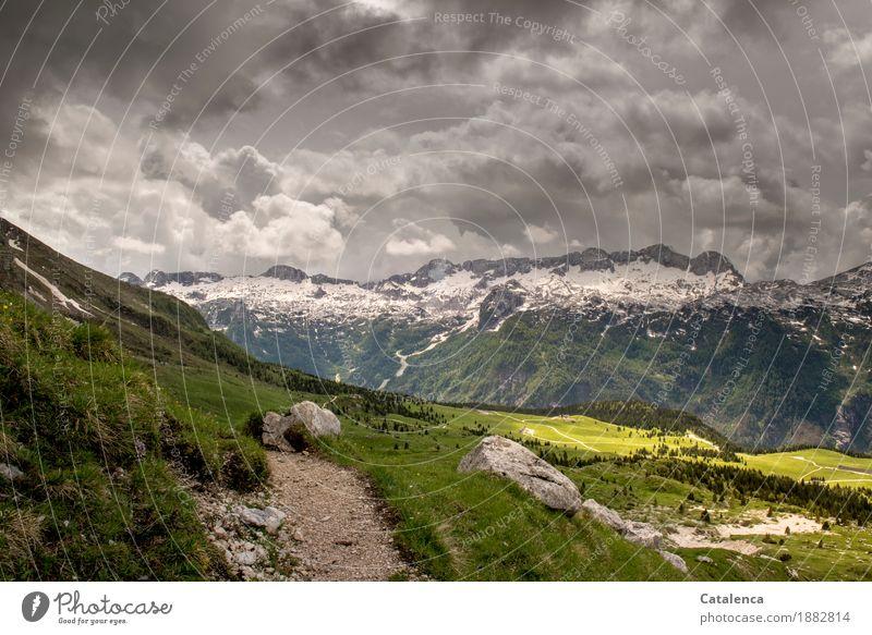 Gewittrig Berge u. Gebirge wandern Landschaft Pflanze Gewitterwolken Sommer Klimawandel schlechtes Wetter Schnee Gras Alpen Schneebedeckte Gipfel Alm
