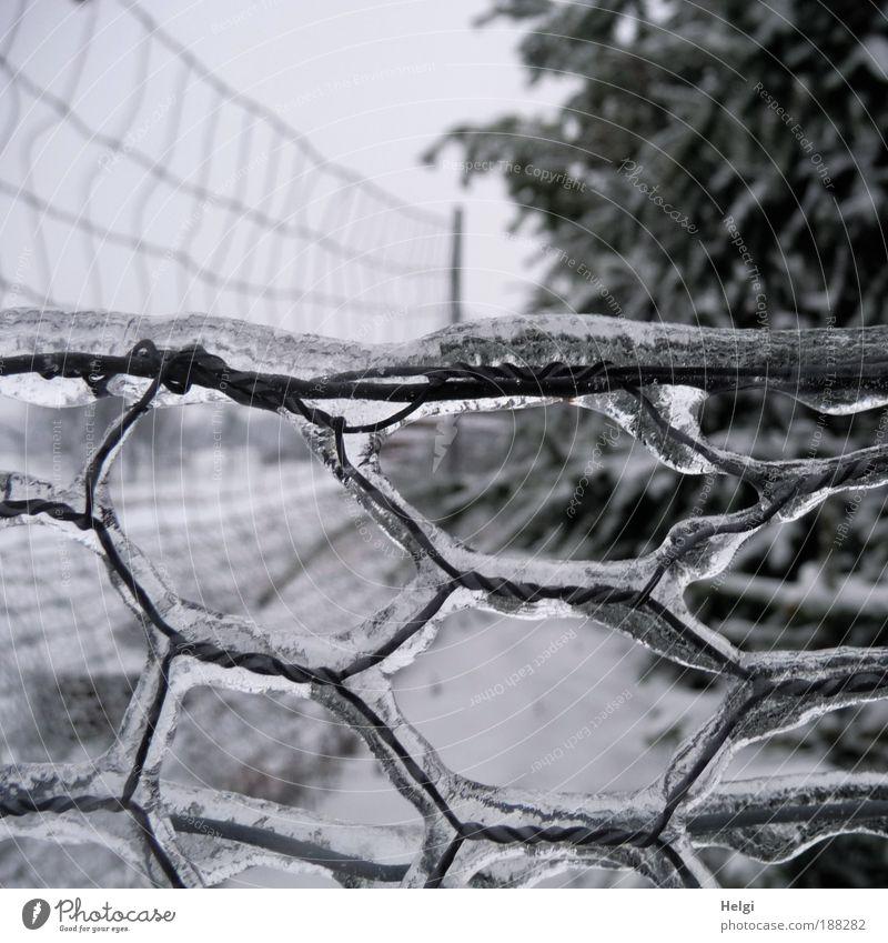 eisig... Natur weiß Baum Winter ruhig schwarz Einsamkeit kalt grau Landschaft Eis Metall Feld glänzend Wetter Umwelt