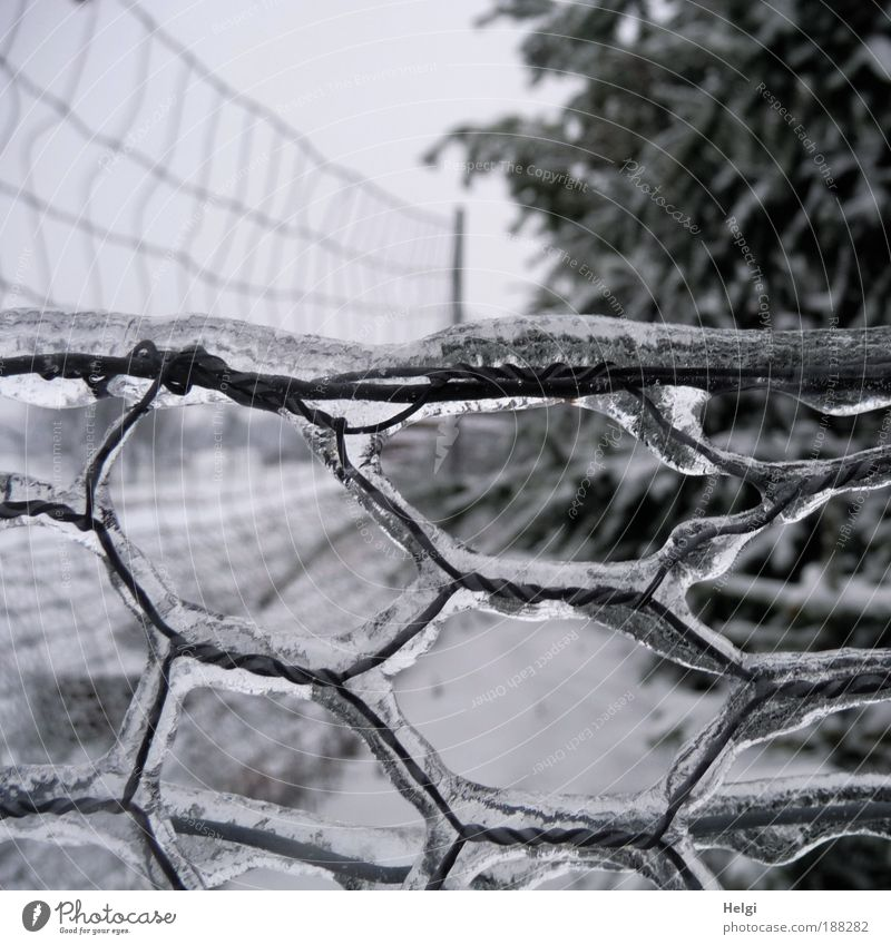 eisig... Umwelt Natur Landschaft Winter Wetter schlechtes Wetter Eis Frost Baum Feld Metall glänzend Wachstum außergewöhnlich einfach kalt grau schwarz weiß
