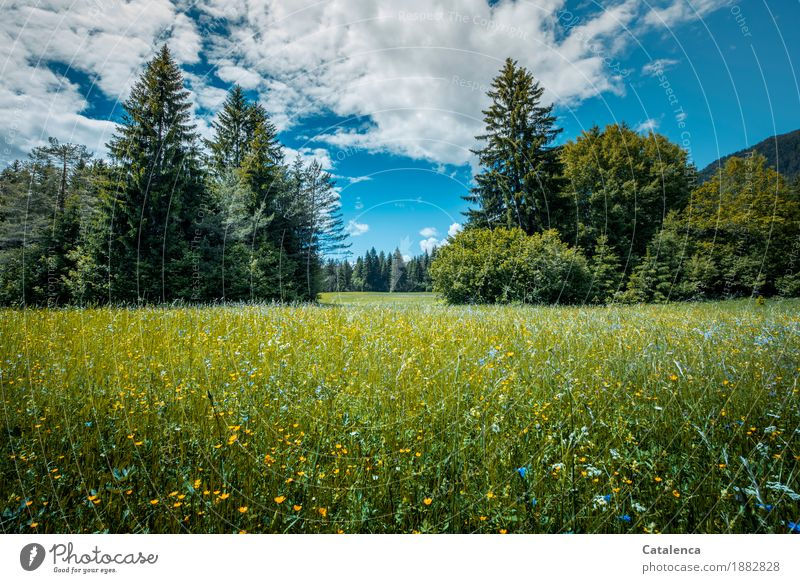 Summer blues Himmel Natur Pflanze blau Sommer grün weiß Baum Landschaft Erholung Wolken ruhig schwarz Umwelt gelb Blüte