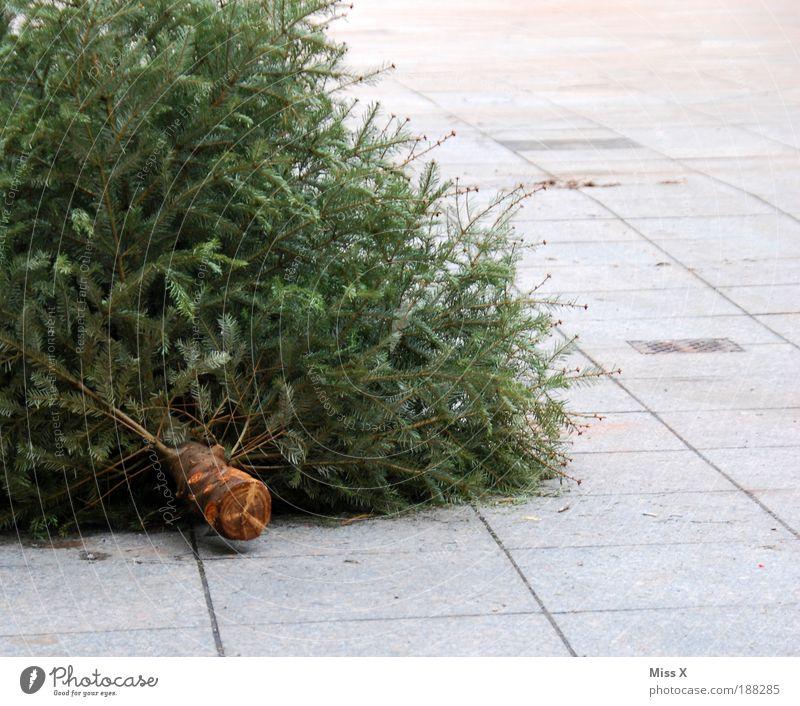 Knut Häusliches Leben Dekoration & Verzierung Winter Pflanze Baum alt trocken Ende Weihnachtsbaum Tanne wegwerfen Tannennadel Außenaufnahme Nahaufnahme