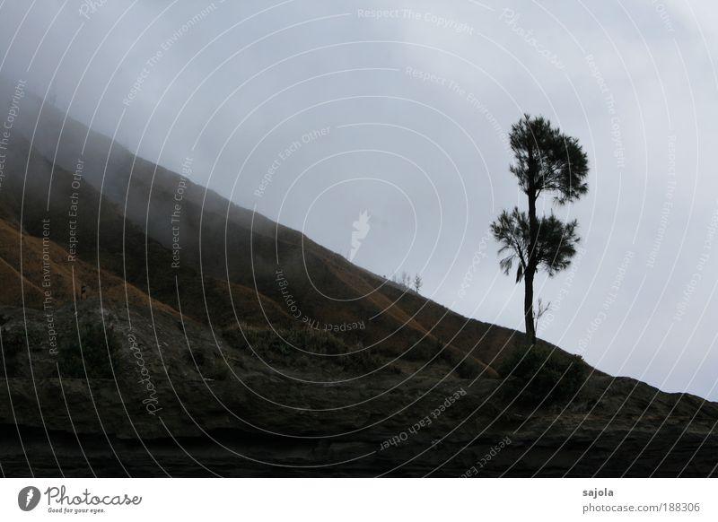 am fusse des bromo Natur Himmel Baum Pflanze Ferien & Urlaub & Reisen dunkel Traurigkeit Landschaft Nebel Umwelt Erde trist Asien Farbe Vulkan schlechtes Wetter