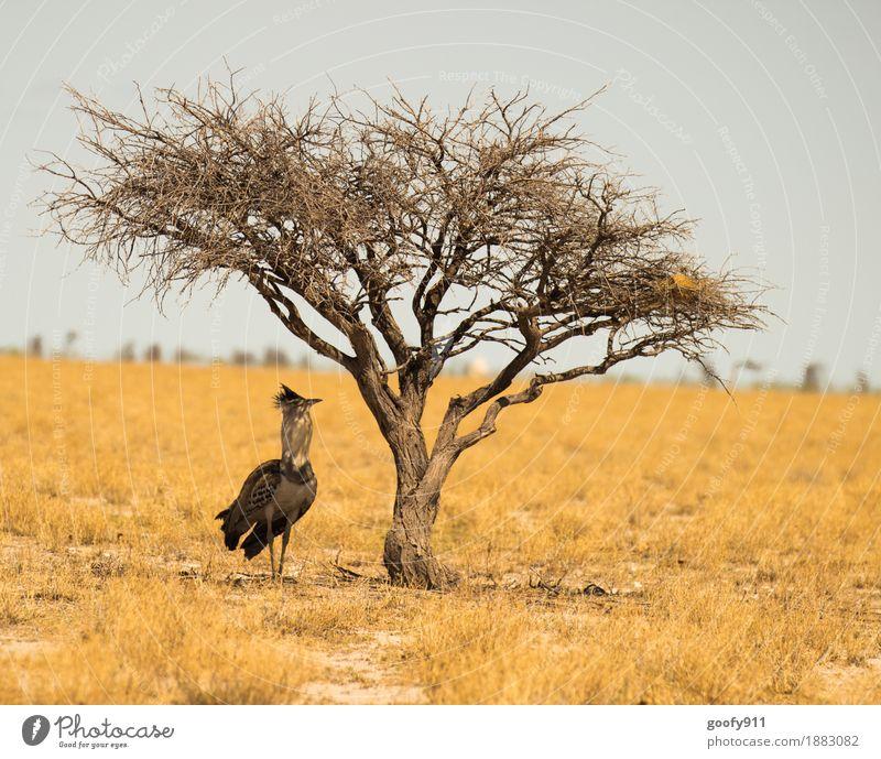 Schattiges Plätzchen!!! Himmel Natur Ferien & Urlaub & Reisen Sommer Sonne Baum Landschaft Tier Ferne Wärme Umwelt Frühling Sand Luft Wildtier stehen