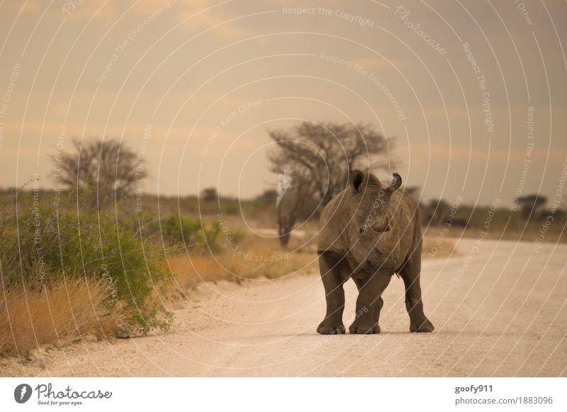 Nashorn 3 Himmel Natur Ferien & Urlaub & Reisen Sommer Sonne Landschaft Wolken Tier Ferne Umwelt Frühling Sand Erde Ausflug Wildtier Sträucher