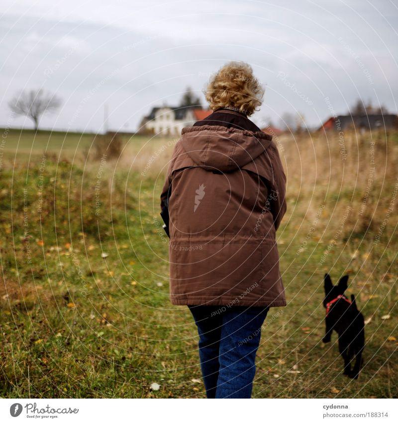 Spaziergang Leben Wohlgefühl Erholung ruhig wandern Mensch Weiblicher Senior Frau Umwelt Natur Landschaft Herbst Wiese Hund Bewegung Freiheit Freizeit & Hobby