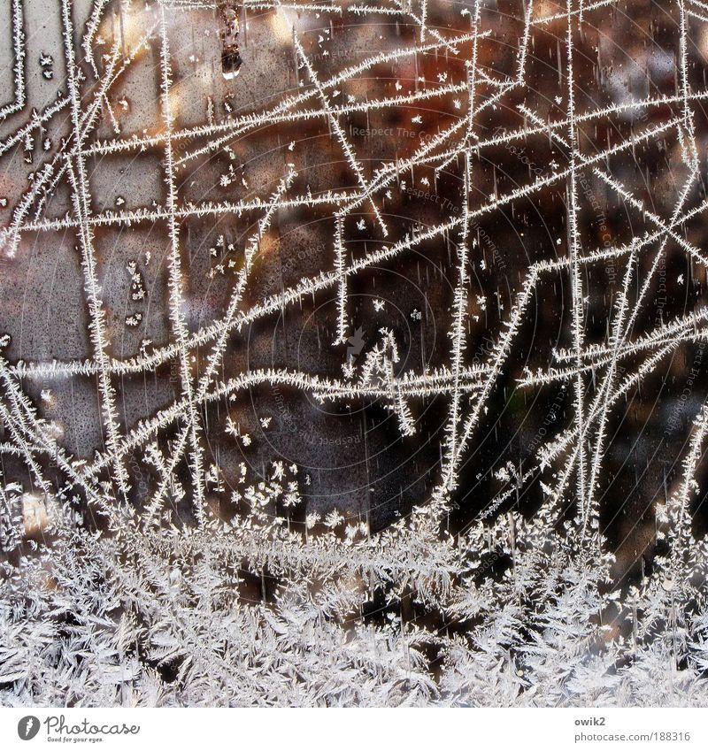 Winter bizarr Dekoration & Verzierung Kunstwerk Natur Pflanze Urelemente Wasser Eis Eisblumen Eiskristall Glas Ornament frieren glänzend leuchten Wachstum