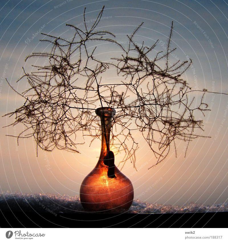 Winter romantisch Häusliches Leben Dekoration & Verzierung Vase Glas Trockenpflanze klein winzig zerbrechlich Kristalle Himmel Sonne leuchtende Farben