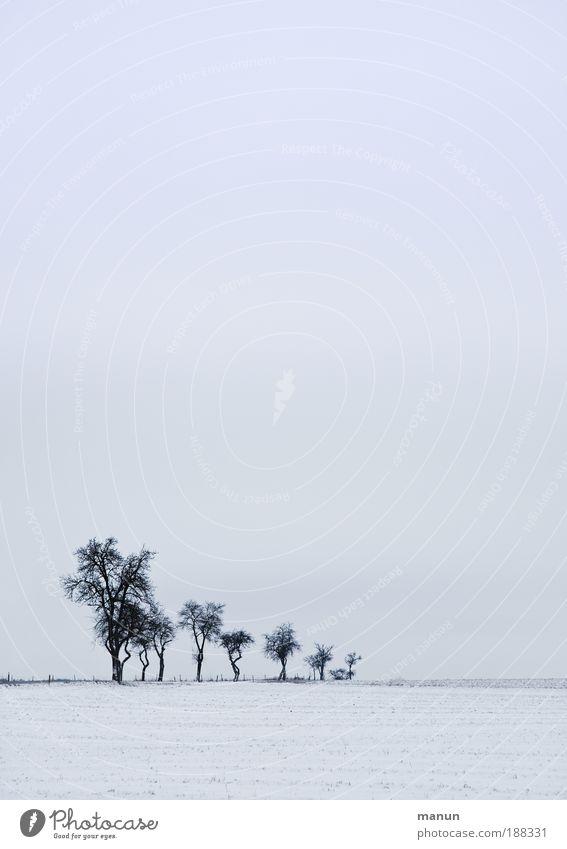 Ruhezeit Natur Himmel weiß Baum blau Winter ruhig Einsamkeit kalt Schnee Erholung Traurigkeit Landschaft Eis Feld Umwelt