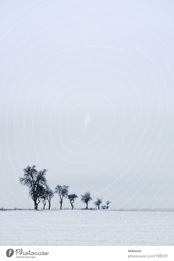 Ruhezeit Natur Landschaft Himmel Winter Eis Frost Schnee Baum Feld Erholung frieren kalt trist blau weiß Traurigkeit Frustration Einsamkeit ruhig stagnierend