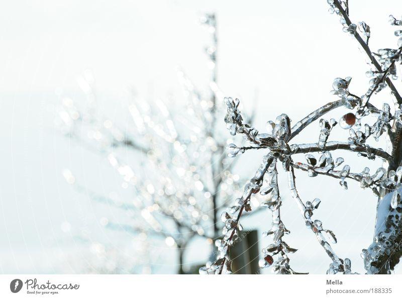 Die gläsernen Bäume von Mandala Umwelt Natur Pflanze Winter Klima Klimawandel Wetter Eis Frost Baum Park frieren glänzend außergewöhnlich hell kalt natürlich