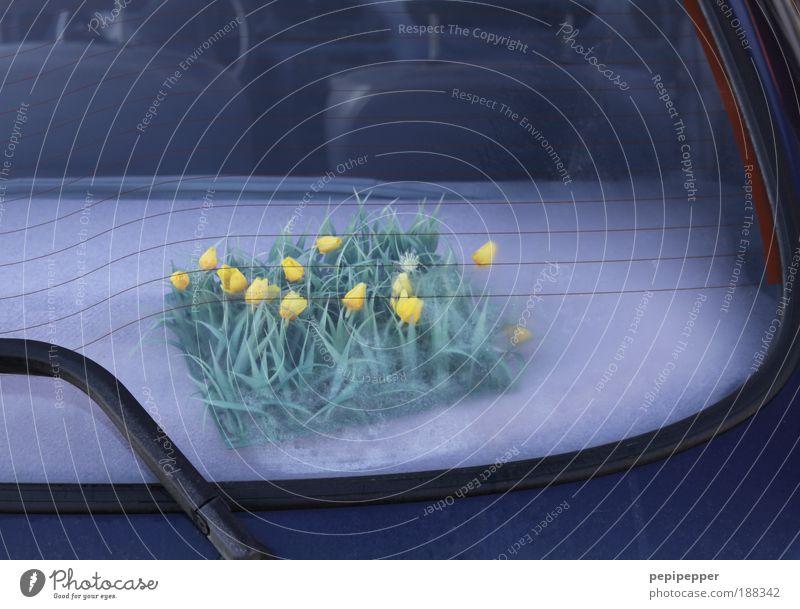 Ich habe den Frühling schon gesehen blau Pflanze Blume Freude Blüte PKW Fröhlichkeit Dekoration & Verzierung Kunststoff Kitsch Kreativität Blühend Duft