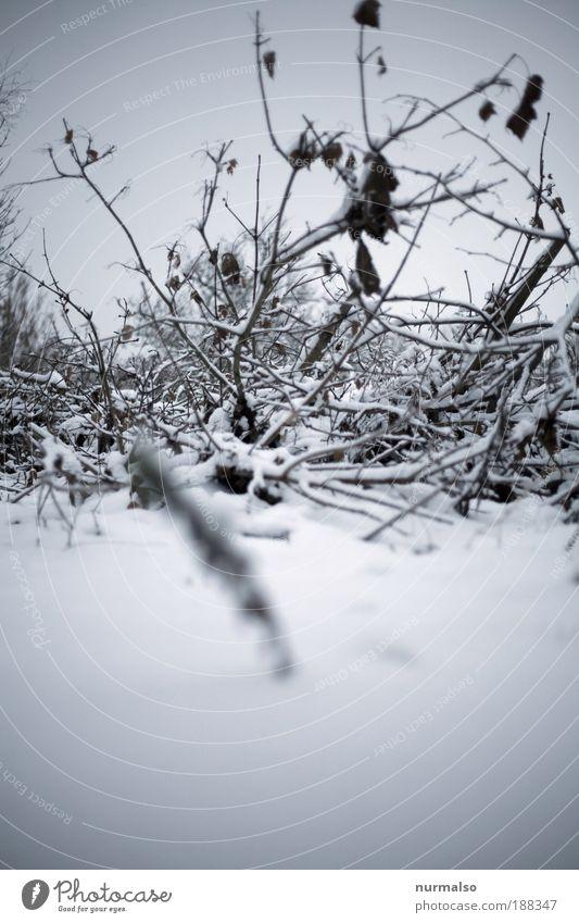 under the snow Natur Pflanze Landschaft ruhig Winter kalt Umwelt Schnee Kunst Garten liegen wild Eis Angst Sträucher Klima